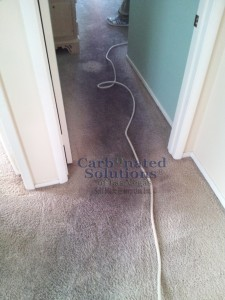 www.carbonatedsolutionsoflasvegas.com carpet cleaning Las Vegas