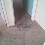 www.carbonatedsolutionsoflasvegas.com/Pet Urine Odor Removal Carpet Cleaning